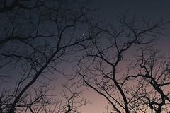 Moon Catcher (ainulislam) Tags: moon moonlight night nightsky sky skycrack tree baretree leafless branches eid bd bangladesh sajek sajekvalley evening shade