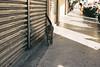 cnv000037 (雅布 重) Tags: nikon f100 nikkor 50mm f14d tudorcolors xlx200 film snap 2017 taiwan cat keelung
