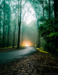 Bruxner Rain Forest - DSC7668-15 (cleansurf2) Tags: rainforest forest trees road leadinglines vanishingpoint car light mist fog cloud green mood nature natural australia coffsharbour mountains drive sony screensaver a7ii 1635mm wideangle ilce surreal emount tones tan landscape glow dark color colour cool clouds contrast black background backdrop night longexposure lowkey lonely