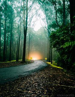 Bruxner Rain Forest - DSC7668-15