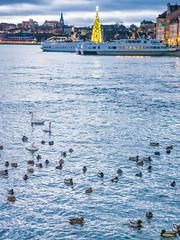 Strömbron sunrise, Stockholm Sweden (chas679) Tags: christmastree sweden stockholm palace ducks stockholmslän se