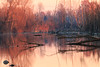 2017-12-03-Lodi-Soltarico-IMG_8328 (enibell) Tags: soltarico acqua fiumeadda lanca morta tramonto