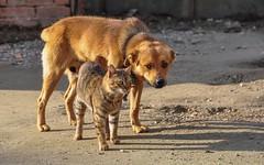 friends (01) (Vlado Ferenčić) Tags: catsdogs cats dogs vladimirferencic animals vladoferencic animalplanet podravina hrvatska croatia nikond90 nikkor182003556