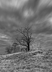 Old cherry tree (see description) (Petr Horak) Tags: novýknín středočeskýkraj czechia cze longexposure nd1000 hoya mzuiko em1 olympus mzuikopro