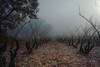 2017 Ice Wine (jeho75) Tags: sony ilce 7m2 zeiss france frankreich château de jonquieres wine wein winter fog foggy morning nebel frost ice