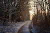 Winter 2017 (ChemiQ81) Tags: polska poland polen polish polsko zagłębie zaglebie dąbrowskie dabrowskie zima winter snow śnieg chmury clouds niebo sky chemiq d5100 nikon nikkor polonia pologne ポーランド بولندا полша poljska pollando poola puola πολωνία pholainn pólland lenkija polija польша пољска poľsko polanya lengyelországban lengyel lengyelország outdoor dobieszowice 2017 las forest