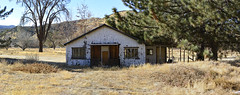 Ranch House 2 (joe Lach) Tags: ranchhouse ranch dilapidated rundown old yellowfield trees farm yellow green brown joelach