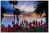 Laguna Beach-Catalina Sunset (Rod.Smith7) Tags: catalina park palmtrees nikon1735f28 ocean d810 sunset lagunabeach