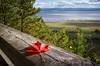 Autumn is coming (dennis.brendel) Tags: autumn baum canada coast herbst indiansummer meer pflanzen plants québec sea sony1635f4zaoss sonyalpha7ii tree water