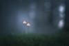 20171016_181010.jpg (jussidimitrijeff) Tags: vantaa fungus