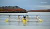 (Zak355) Tags: oban scotland scottish sustainable marine energy envirotek connel bridge plati tidalenergy system sustainablemarineenergy sme floating turbine