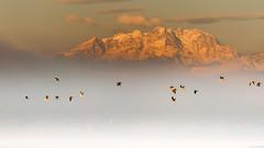 Birdsview on the Monte Rosa (andreasbrink) Tags: birds italy landscape monterosa mountains winter fog lagomaggiore lisanza mist fccfog