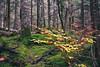 IMG_6654.jpg (Aildrien) Tags: gree autumn musgo selva canon paraiso huesca rocas pirineos trees eos stone aragon arboles musk forest 1740 5d naturaleza otoño oza pyrenees parquenatural verde