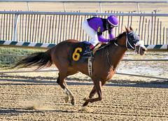 "2017-12-26 (34) r3 Elvis Trujillo on #6 Enterprise Value (JLeeFleenor) Tags: photos photography maryland md horse jockey جُوكِي ""赛马骑师"" jinete ""競馬騎手"" dżokej jocheu คนขี่ม้าแข่ง jóquei žokej kilparatsastaja rennreiter fantino ""경마 기수"" жокей jokey người horses thoroughbreds equine equestrian cheval cavalo cavallo cavall caballo pferd paard perd hevonen hest hestur cal kon konj beygir capall ceffyl cuddy yarraman faras alogo soos kuda uma pfeerd koin حصان кон 马 häst άλογο סוס घोड़ा 馬 koń лошадь laurelpark marylandraces races outdoors outside winter cold"
