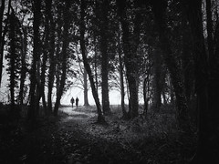 This is where the shadows come to play (Paul Beentjes) Tags: dark light donker licht pad path bomen trees enroute onderweg
