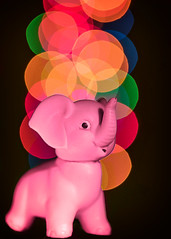 Pink Elephant (melmark44) Tags: hungover hangover pinkelephant bokeh macro macromondays memberschoicebokeh lightpainting pink red yellow orange green blue colors hmm canoneos5dmarkiv ef100mmf28macrousm canon fullframe photography elephant christmaslights tabletop closeup drunkenhallucination macrolens longexposure dof shallowdepthoffield flashlight led