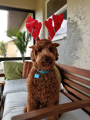 Ruby Red's Corky is ready for reindeer duty!