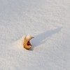 snow cover (ladybugdiscovery) Tags: leaf snow winter cold alone shadow