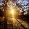 Bursting Free (Paul Bagshaw ---- UK) Tags: shadows instagram iphone grass burst morning winter cold sun trees