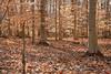 winter woods with sun (long.fanger) Tags: beech winter woods