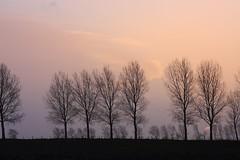 When the sun goes down...... (Crazy Rudie) Tags: cielo puestadesol sunset árboles 40d eos canon bomen zonsondergang lucht amanecer negro naranja sol black orange sky trees sun