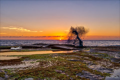 Sing for the day (JustAddVignette) Tags: algae australia bird dawn landscapes newsouthwales northcurlcurl northernbeaches ocean reflections rockpool rocks seascape seawater sky splash sunrise sydney water waves