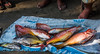 2017 - Mexico - Zihuatanejo - Fish Market (Ted's photos - For Me & You) Tags: 2017 cropped mexico nikon nikond750 nikonfx tedmcgrath tedsphotos tedsphotosmexico vignetting zihuatanejo zihuatanejomexico fish wholefish catch catchoftheday tarp fishhead fishtail seafood bonito toes sandals