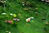 Monet's pond (Awayfrom Tokyo) Tags: monet pond fish waterlilies impression pool