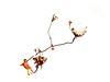 Quand les pensées s'envolent.. (Amiela40) Tags: coeur pensée amour amitié lien bond fleur plante rouge orange heart red love