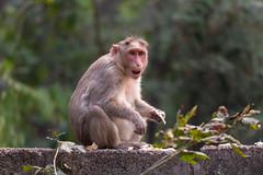 I hate Thursdays (JohnKuriyan) Tags: bengaluru karnataka india in