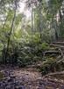 Tamara Negara - Malaysia 1990 (wietsej) Tags: tamara negara malaysia 1990 olympus om4 jungle