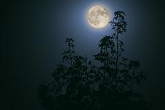 Full Moon Rising (Pragmatic1111) Tags: dark night moon blue teal black silhouette bright color nikon d700 80400mmf4556 outdoor nature moonlit moonlight darkness fullmoon