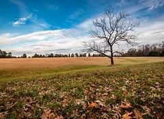 End of Fall (jcernstphoto) Tags: manassasbattlefield tree leaves fall autumn civilwar