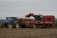 Grimme SF 1700 GBS Self Propelled Potato Harvester filling a Larrington Trailers Guardian Potato Box Loader Trailer drawn by a New Holland T6.175 Tractor (Shane Casey CK25) Tags: grimme sf 1700 gbs self propelled potato harvester filling larrington trailers guardian box loader trailer drawn new holland t6175 tractor traktori traktor trekker tracteur trator ciągnik county cork crop crops potatoes spud spuds harvest harvesting dig digging earth soil rootcrop root ground grow growing land field tillage castletownroche work working horse power horsepower pull pulling machinery machine nikon d7200 collecting agriculture agri dirt farm farming farmer lifting irish ireland