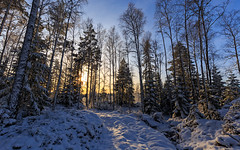 Winter Forest Light (NaturaRAW) Tags: canonef1635f4lisusm canoneos6d woods nature landscape pinetrees winter forest sun snow outdoors
