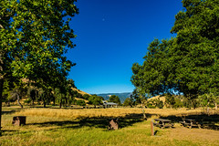 Morning at the park (randyherring) Tags: ca california sanjose santaclaracountyparks santacruzmountains santateresacountypark dryseason flora grass hiking morning mountains nature outdoor park recreation summer trees vegetation