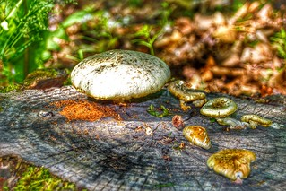 Lake Placid  New York ~ Downtown Fungus - HIstoric District