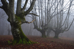 Guardians of the Forest (Hector Prada) Tags: bosque niebla invierno árbol hojas hayedo encantado misterioso forest fog winter tree leaves enchanted misterious magic creepy charmed paísvasco basquecountry