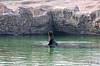 IMG_3183_copy (sinanaydin.net) Tags: eskişehir park hayvanat bahçesi zoo sazova animal