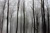 Lignes gelées BG (ZUHMHA) Tags: bulgarie bulgaria winter hiver ice gel tronc tempête fog brume brouillard buzludja wood forest tree snow neige arbre forêt bois