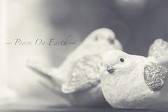 peace on earth (rockinmonique) Tags: doves mono monochrome bw blackandwhite soft light ethereal peace happynewyear moniquew canon canont6s tamron copyright2017moniquew