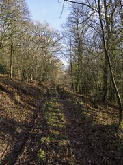 (Turbogirlie) Tags: newyearsday winter2018 2018 herefordshire lingen lingenvalletwood woodlandwalks northherefordshire walk1000miles2018 droverslanes walksinherefordshire winterwalks wintersunshine winterskies windandrain hills rollinghills forestrycommission woodlandtrust