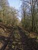 (Turbogirlie) Tags: newyearsday winter2018 2018 herefordshire lingen lingenvalletwood woodlandwalks northherefordshire walk1000miles2018 droverslanes walksinherefordshire winterwalks wintersunshine winterskies windandrain hills rollinghills forestrycommission woodlandtrust