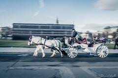 1800 (DanAie) Tags: horses horse animal 1800 history wien osterrich austria vienna speed österreich photography pentax street streetphotography strada