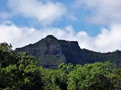Wailua River State Park - Fern Grotto (76) (pensivelaw1) Tags: hawaii kauai wailuariverstatepark ferngrotto