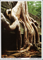 postcard - Ta Prohm, Cambodia 1 (Jassy-50) Tags: postcard angkor siemreap cambodia angkorarchaeologicalpark taprohmtemple tombraiderstemple temple ancient ruins khmer archaeology unescoworldheritagesite unescoworldheritage unesco worldheritagesite worldheritage whs treeroots tree roots