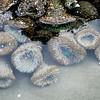 up close (L. Grainne) Tags: californiacoast beachphotography lowtide tidepools starfish seaanemone tidal naturephotography sealife