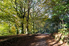 Looking back to Autumn.....again! - NK2_3058 (Jean Fry) Tags: burrator dartmoor dartmoornationalpark devon nationalparks trees uk westcountry autumn autumncolours autumnleaves