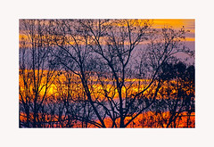 Trees in Winter — Image 1 (George McHenry Photography) Tags: sunrise landscape abstract