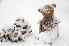 When you've never seen that stuff before (eleni m) Tags: snow winter outdoor tabletop garden bear pinecones nature cold white bow